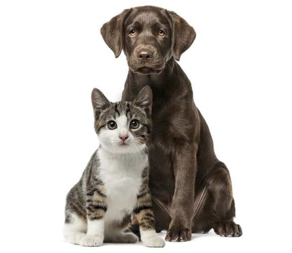 Cat and Dog Sitting at Pet Friendly Apartment